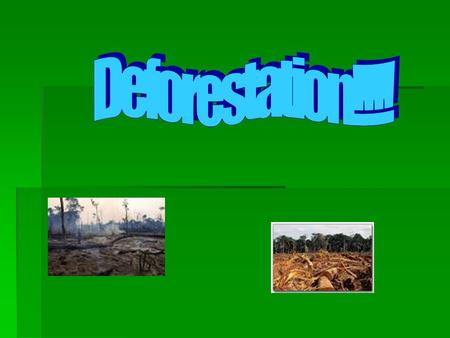 The effect of the deforestation.  The effects of the rainforest destruction are very bad. People cut down the forests for farmland which causes lots.