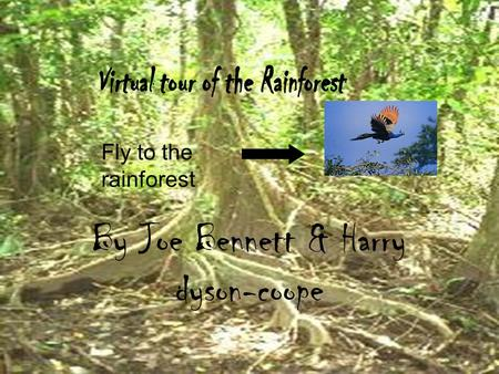 By Joe Bennett & Harry dyson-coope Fly to the rainforest.