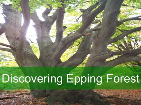 Discovering Epping Forest. Roles Champions Your role: –To ensure the school commitment to the project is met –To promote Discovering Epping Forest within.
