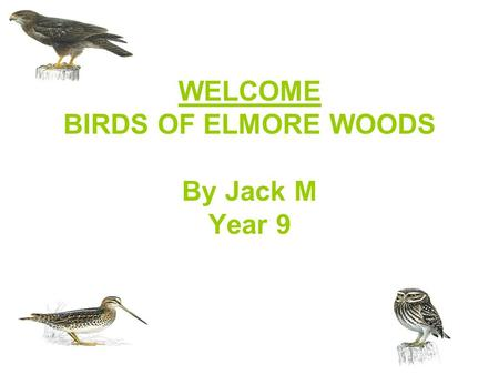 WELCOME BIRDS OF ELMORE WOODS By Jack M Year 9. SNIPE Overview SNIPE ARE MEDIUM SIZED, SKULKING WADING BIRDS WITH SHORT LEGS AND LONG STRAIGHT BILLS.