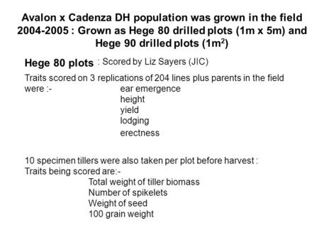 Avalon x Cadenza DH population was grown in the field 2004-2005 : Grown as Hege 80 drilled plots (1m x 5m) and Hege 90 drilled plots (1m 2 ) Traits scored.