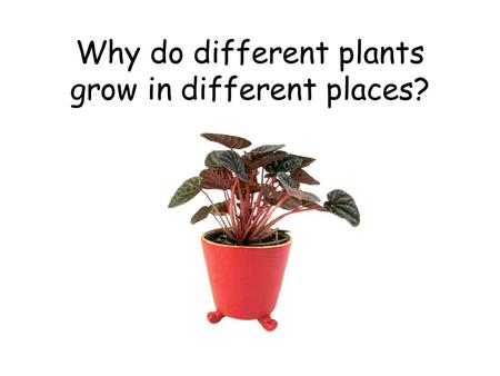 Why do different plants grow in different places?.