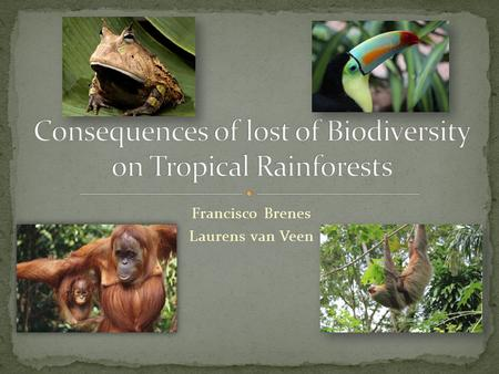 Francisco Brenes Laurens van Veen. Decrease on forest layers (flora may even suffer extinctions)