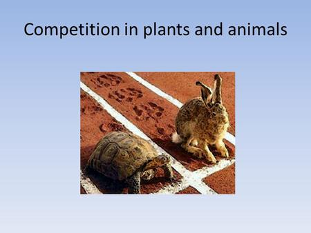 Competition in plants and animals. Possible relationships between 2 organisms A and B + = 'gain' - = 'lose' O = 'no effect' Organism A +_0 Organism B.
