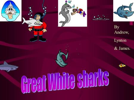 By Andrew, Lynton & James. Click here to see a shark movie.