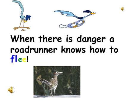 When there is danger a roadrunner knows how to fl ee!ee!