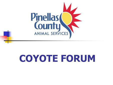 COYOTE FORUM. Which one is the Coyote? Maybe it's one of these?