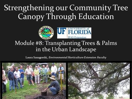 Strengthening our Community Tree Canopy Through Education Module #8: Transplanting Trees & Palms in the Urban Landscape Laura Sanagorski, Environmental.