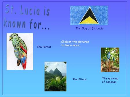 The Pitons The growing of bananas The flag of St. Lucia The Parrot Click on the pictures to learn more.