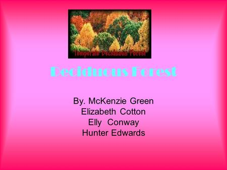 Deciduous Forest By. McKenzie Green Elizabeth Cotton Elly Conway Hunter Edwards.