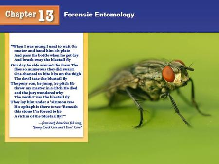 Forensic Entomology. Taxonomy Classification of Things in an Orderly Way We are interested in the phylum, Arthropoda; class, Insecta; order: Diptera (flies)