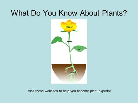 What Do You Know About Plants? Visit these websites to help you become plant experts!