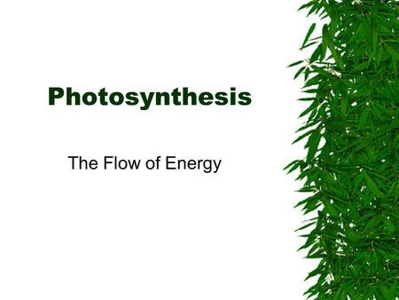 Photosynthesis The Flow of Energy.