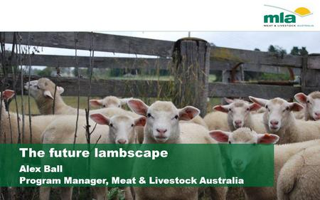 The future lambscape Alex Ball Program Manager, Meat & Livestock Australia.