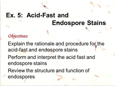 Ex. 5: Acid-Fast and Endospore Stains Objectives: Explain the rationale and procedure for the acid-fast and endospore stains Perform and interpret the.