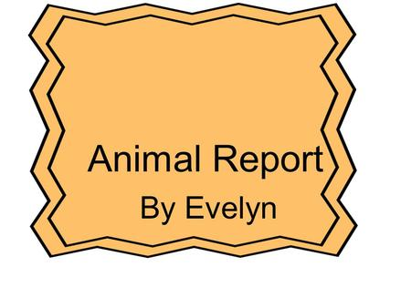 Animal Report By Evelyn. Polar Bear Table of Contents Introduction …………………………………p.3 What Do Look Like?………p.4 What Do Eat?....................p.5 Where.