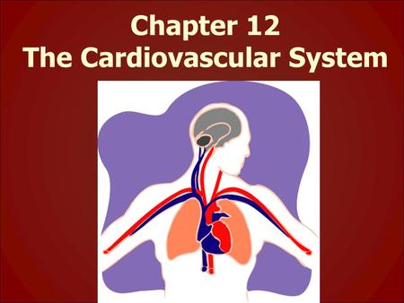 Chapter 12 The Cardiovascular System. * function: circulate blood throughout entire body: – transport O 2 and nutrients (glucose) to cells – transport.
