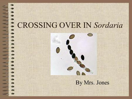 CROSSING OVER IN Sordaria By Mrs. Jones. MAIN MENU Intro to the fungi Sordaria Life CycleSordaria Life Cycle Structures of SordariaStructures of Sordaria.