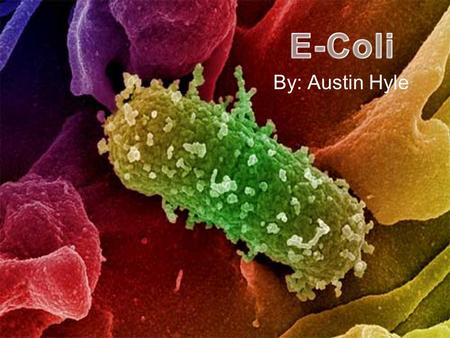 By: Austin Hyle. Escherichia Coli The scientific name for E-Coli is Escherichia Coli. E-Coli are members of a large group of bacterial germs that inhabit.
