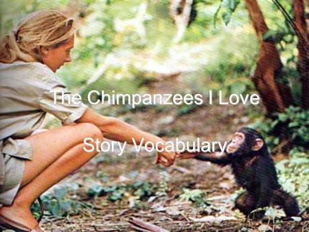 The Chimpanzees I Love Story Vocabulary. Words to Know Captive Companionship Existence Ordeal Primitive Sanctuaries Stimulating.