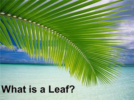 What is a Leaf?. Leaves Leaves come in many shapes. There are two main types: needle leaves and broad leaves.