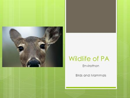 Wildlife of PA Envirothon Birds and Mammals  Identify  Describe the natural history  Determine the wildlife biology  Evaluate habitat  Check out.