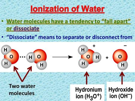 Two water molecules. one water molecule Hydrogen ion Hydroxide ion.