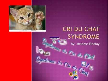 Cri Du Chat Syndrome By: Melanie Findlay.