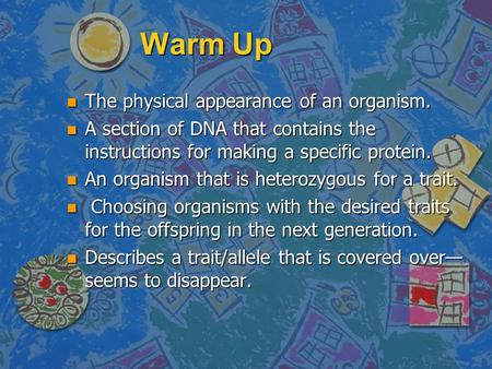 Warm Up n The physical appearance of an organism. n A section of DNA that contains the instructions for making a specific protein. n An organism that.