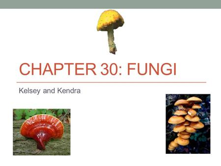 CHAPTER 30: FUNGI Kelsey and Kendra. What is a Fungus? Fungi have absorptive heterotrophy and chitin in their cell walls. Fungi have various nutritional.