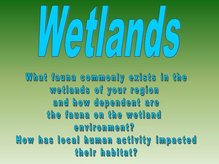 1. Why did we ask the question? We asked the question because we were particularly interested in the fauna of wetlands. In addition to this, we wanted.