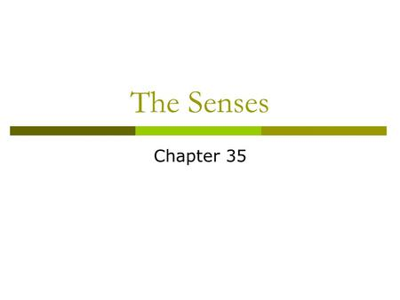 The Senses Chapter 35.
