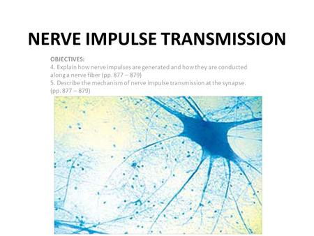 NERVE IMPULSE TRANSMISSION OBJECTIVES: 4. Explain how nerve impulses are generated and how they are conducted along a nerve fiber (pp. 877 – 879) 5. Describe.