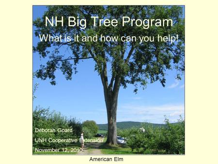 NH Big Tree Program What is it and how can you help! American Elm Deborah Goard UNH Cooperative Extension November 12, 2010.