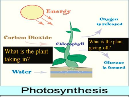 What is the plant taking in? What is the plant giving off?