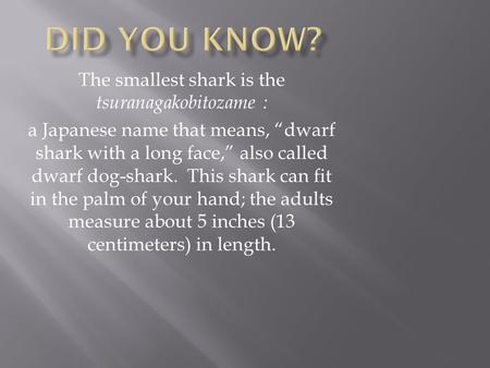 The smallest shark is the tsuranagakobitozame :
