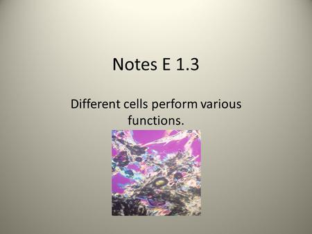 Notes E 1.3 Different cells perform various functions.