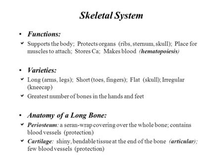 Skeletal System Functions:  Supports the body; Protects organs (ribs, sternum, skull); Place for muscles to attach; Stores Ca; Makes blood (hematopoiesis)