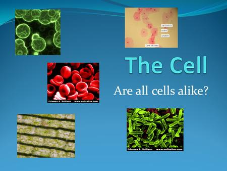 Are all cells alike?. All organisms are made of cells The cell is the basic unit of structure & function The cell is the smallest unit that can still.