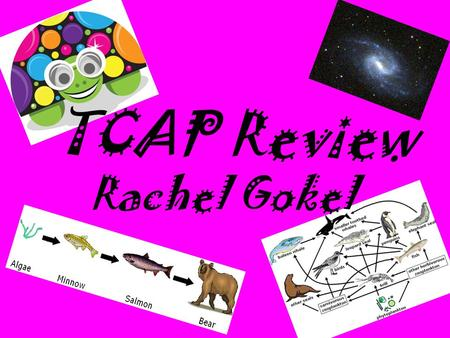 TCAP Review Rachel Gokel. Universe Review All objects in space make up the universe A star is an object in space that gives off its own light and heat.