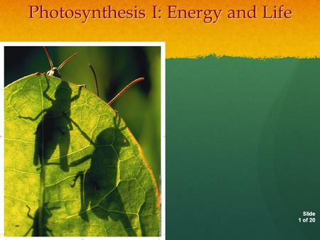 Slide 1 of 20 Photosynthesis I: Energy and Life Copyright Pearson Prentice Hall.