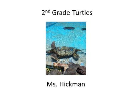 2 nd Grade Turtles Ms. Hickman. Wool Myun Aan Day (Santa Claus is coming to town in Korean) St. Nick Night Dec. 5 th,2013 at 7:00pm.