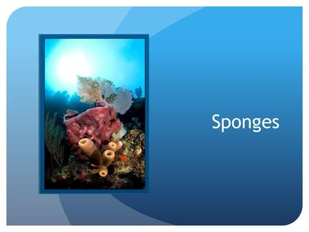 Sponges. Classification: Domain Eukarya Kingdom Animalia Phylum Porifiera – due to its pores * More than 7,000 named species *The rest of a sponge's classification.