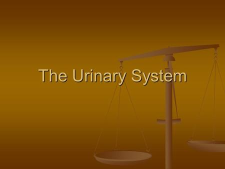 The Urinary System. Overview The urinary system balances the water content in the blood as well as ions of Na and K and pH. The urinary system balances.