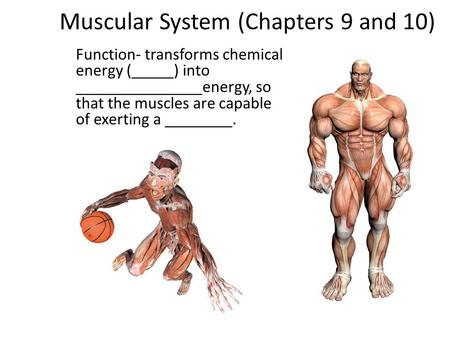 Muscular System (Chapters 9 and 10) Function- transforms chemical energy (_____) into _______________energy, so that the muscles are capable of exerting.