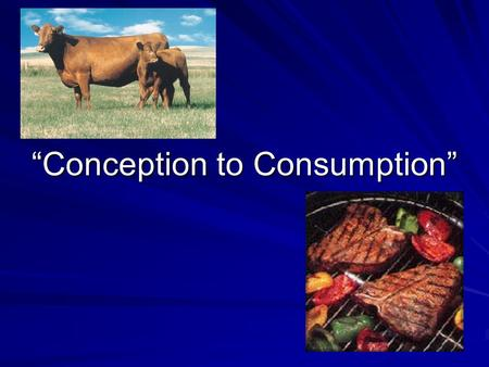 """Conception to Consumption"". Objectives Map the stages of animal growth and development as it relates to market readiness Describe the harvesting process."