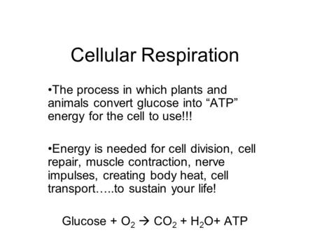 "Cellular Respiration The process in which plants and animals convert glucose into ""ATP"" energy for the cell to use!!! Energy is needed for cell division,"