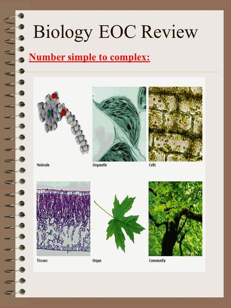 Biology EOC Review Number simple to complex:. Science Methods Steps used to solve a problem Observation Questioning and stating problems Hypothesizing.