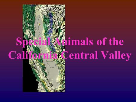 Special Animals of the California Central Valley.