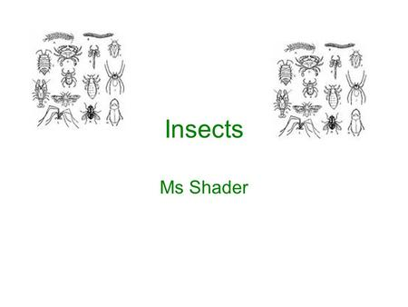 Insects Ms Shader. Insect Project 20 insect species for an 'A', 15 for a 'B' and 10 for a 'C' Labels must have common name on each –Plus place found and.